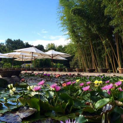 "Discover 300 varieties of water lily spread over 1 hectare of cultivation pools and the link with Claude Monet and his paintings, ""les Nymphéas"""